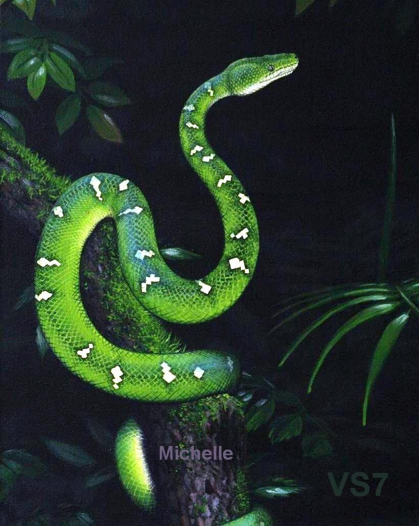 Green Tree-Boa by Michelle